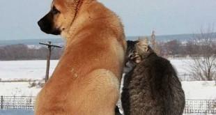 cat-dog41